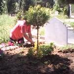 mezarlara toprak değişimi ve bitki bakım