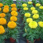 Kocaeli mezar çiçekleri